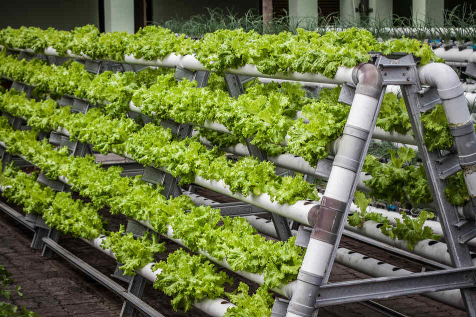 Growing up: Vertical farming is here and it's the future!