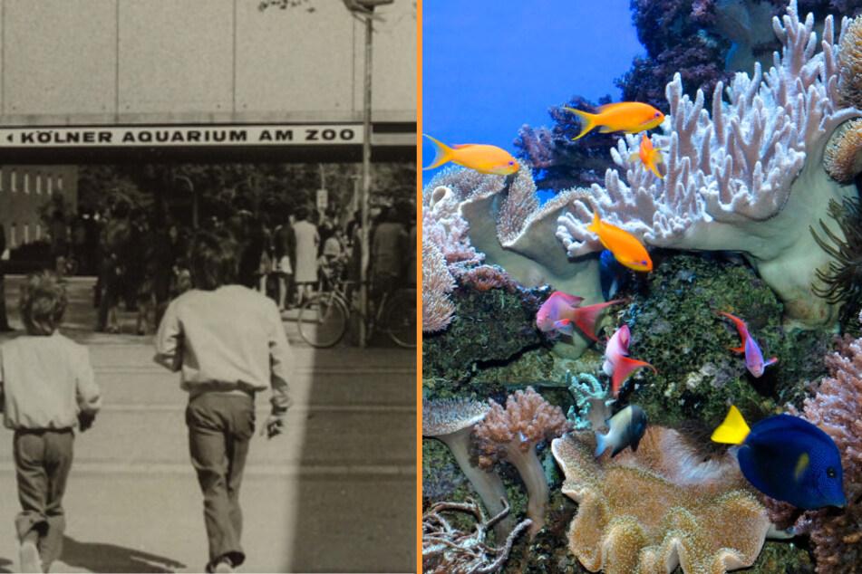 Vor exakt fünf Jahrzehnten, am 29. April 1971, öffnete das Aquarium erstmals seine Pforten und ist seither fester Bestandteil des Kölner Zoos.