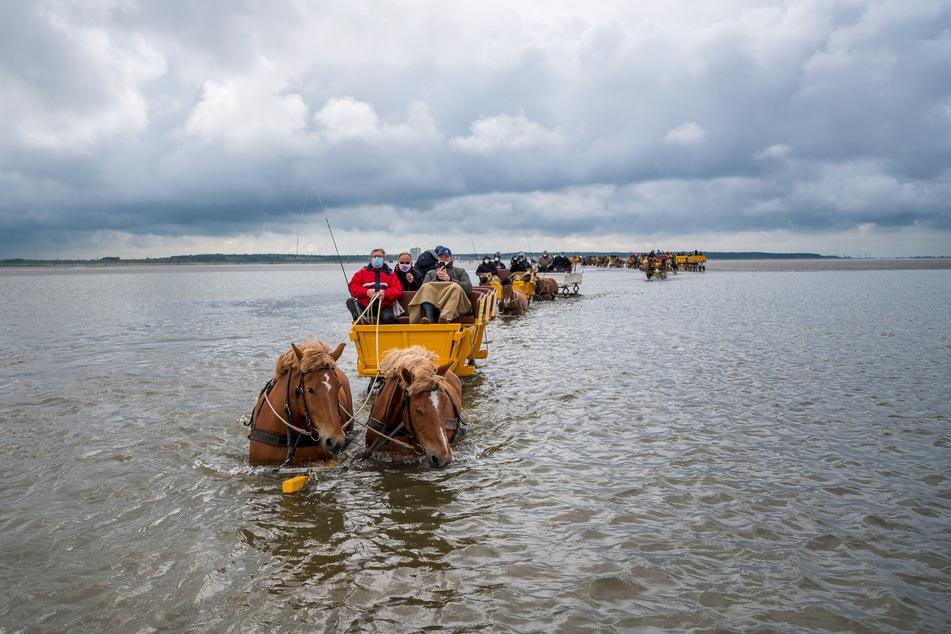 Pferdekutschen fahren durch das Watt zwischen Neuwerk und Cuxhaven.