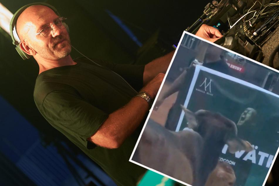 Sven Väth kann's nicht fassen: In Indien gibt es Techno-Kühe!