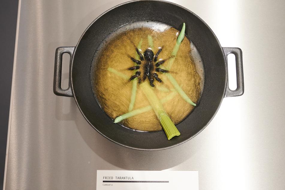 Auch in der Ausstellung zu sehen: Eine Tarantula liegt in einer Suppe.