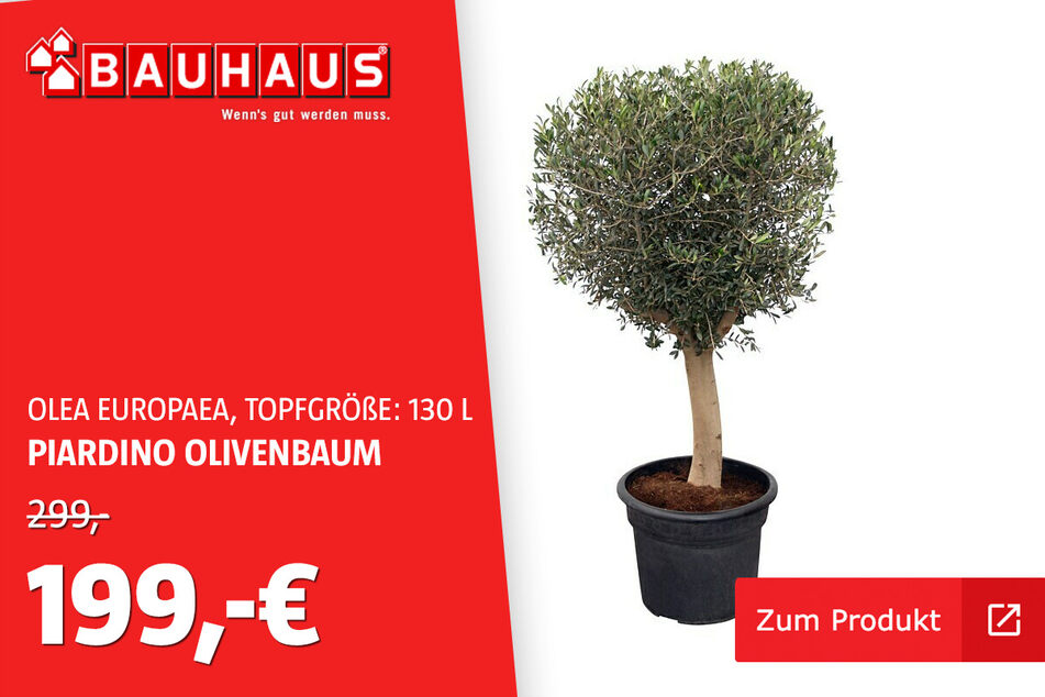 Piardino Olivenbaum im 130 L-Topf für 199 statt 299 Euro