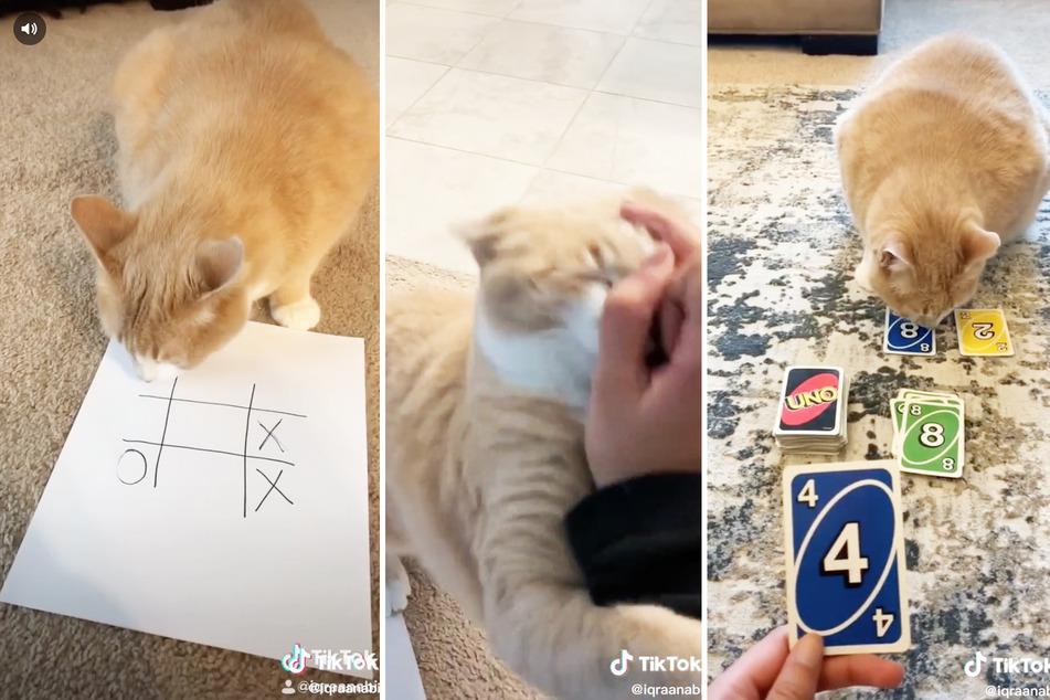 Frau spielt mit Katze und gewinnt immer: Dem Tier gefällt das gar nicht!