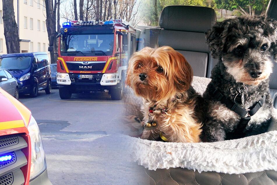 Hunde im Auto eingeschlossen: So macht die Feuerwehr ihr Unglück erträglich