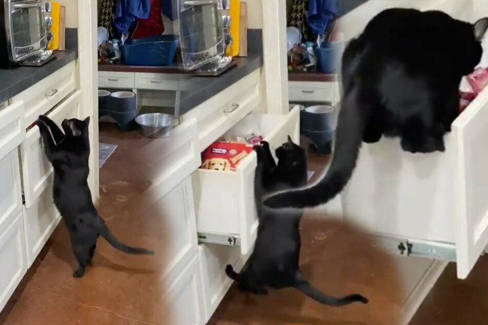 The clip of Sabrina the cat proves that if you want to keep treats safe, the drawers have to be closed all the way.