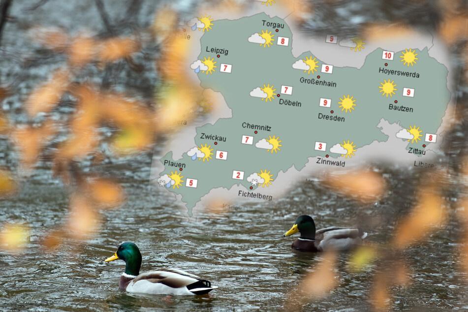 Aufatmen nach frostigen Temperaturen: Sachsen-Wetter bleibt vorerst mild