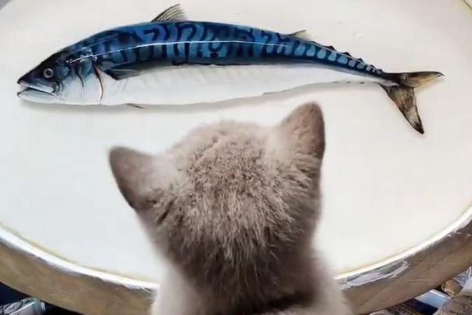 Katze Mai Mai läuft bei diesem Anblick das Wasser im Maul zusammen.