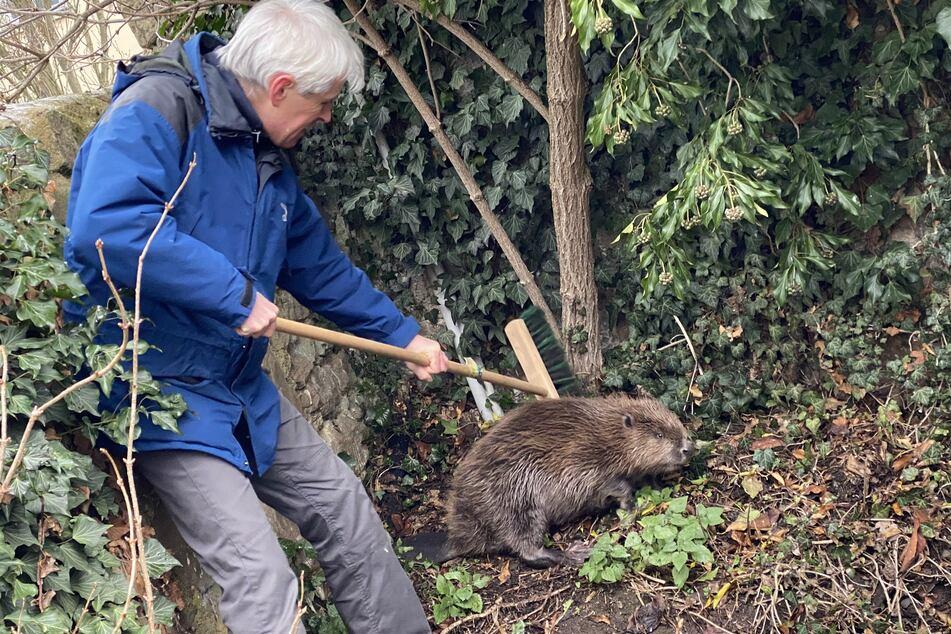 Der Artenschutz-Beauftragte Jörg Burkhard traf am Sonntag in der Fuldaer Innenstadt auf einen pelzigen Ausreißer.