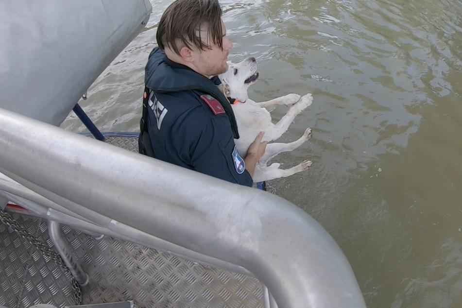 Der Polizeibeamte zog den entkräfteten Vierbeiner aus dem Wasser.