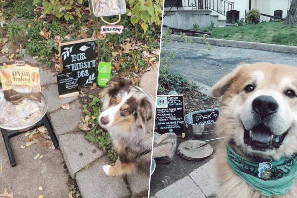 StarPups Coffee: Woman opens dog café for her thirsty neighbors
