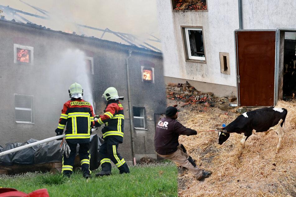 Großbrand in Glashütte: Zwei Gebäude mit zahlreichen Tieren in Flammen