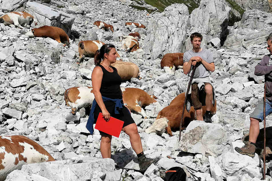 Durch Blitzschlag: 16 Rinder auf Alm getötet