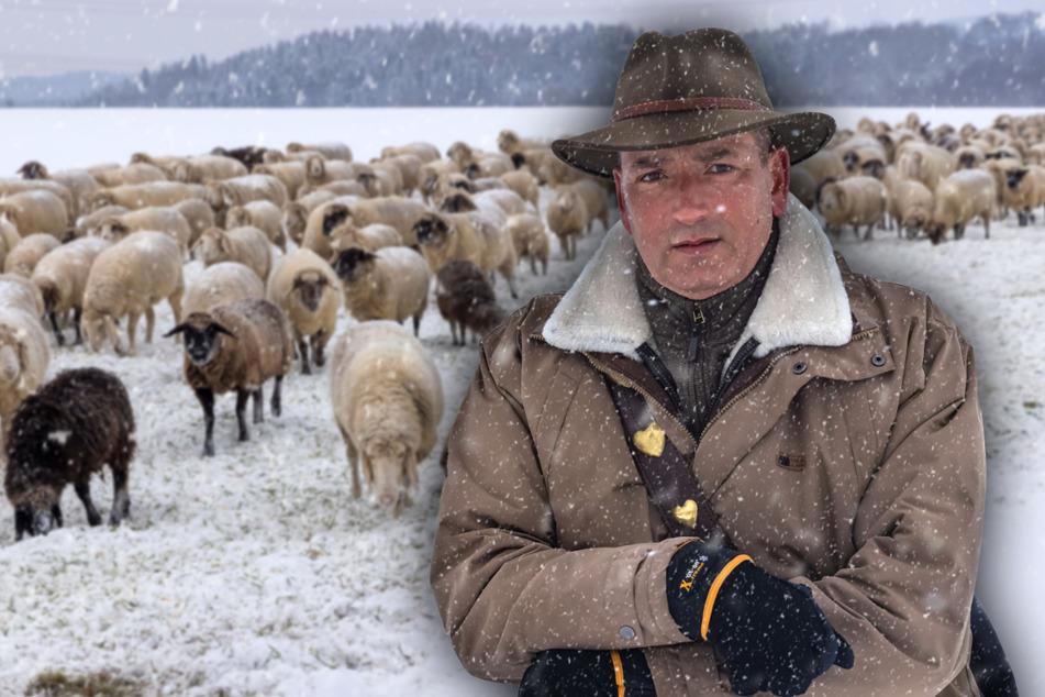 Jan Raupach (52) ist einer der Letzten seiner Art: Ein Wanderschäfer aus Leidenschaft