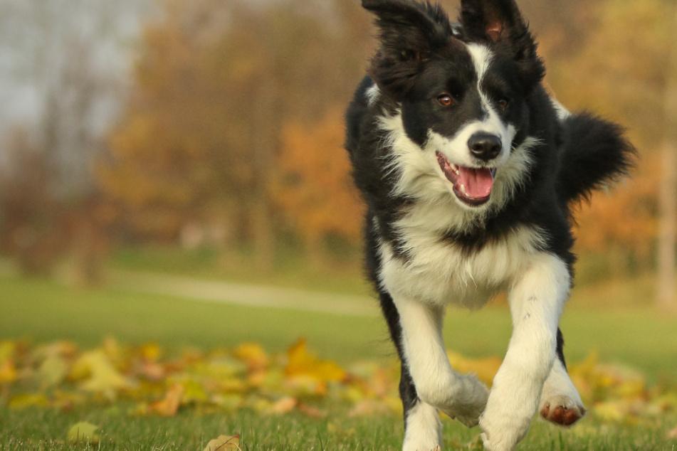 Ihr wollt wissen, wie schlau Euer Hund ist? Jetzt habt Ihr die Gelegenheit dazu!