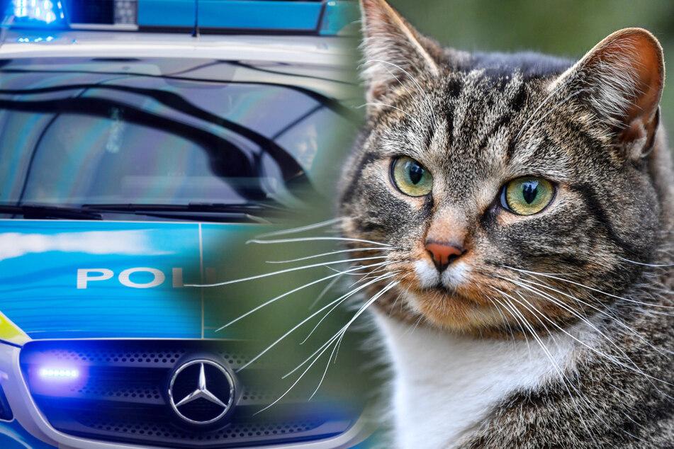Rettungseinsatz wegen Samtpfote: Katze im Motorraum eingeklemmt