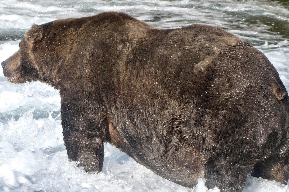 Alaska picks the winner of this year's Fat Bear Week