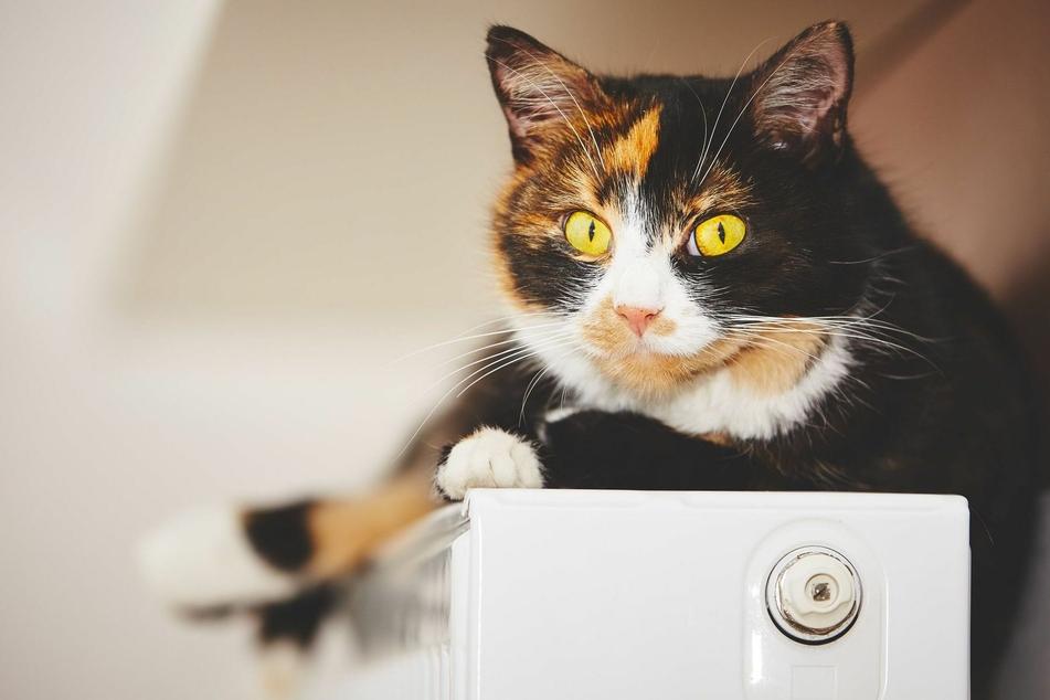 Darum ist es gefährlich, wenn Katzen auf der Heizung liegen