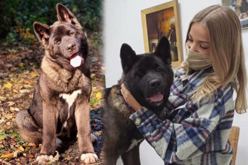 Pietro Lombardis Hund muss zum Tierarzt, aber wo steckt der Sänger?