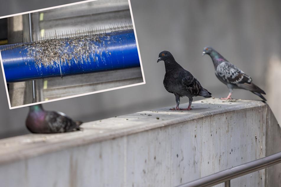 Leipzig: Mit freier Kost und Logis: Bahn baut Hotel für kackende Tauben in Leipzig