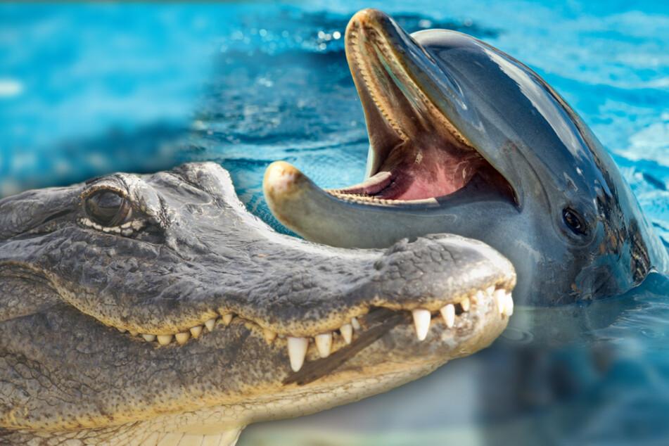Wie Delfine! Neue Erkenntnis zu Urzeit-Monster