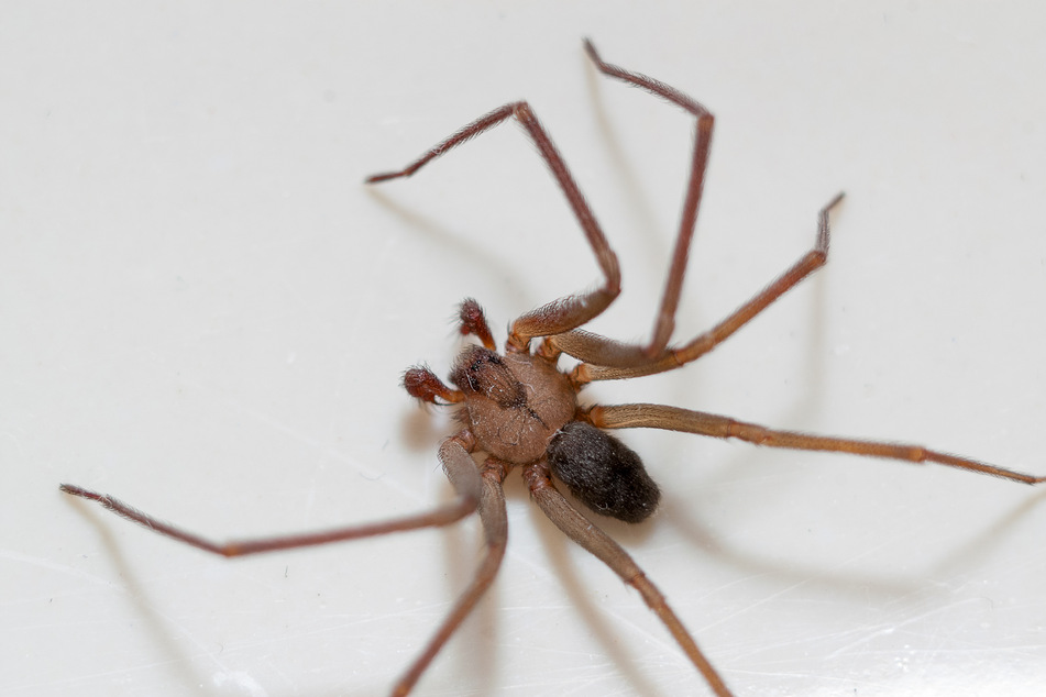 Spiders are among the most hated critters.