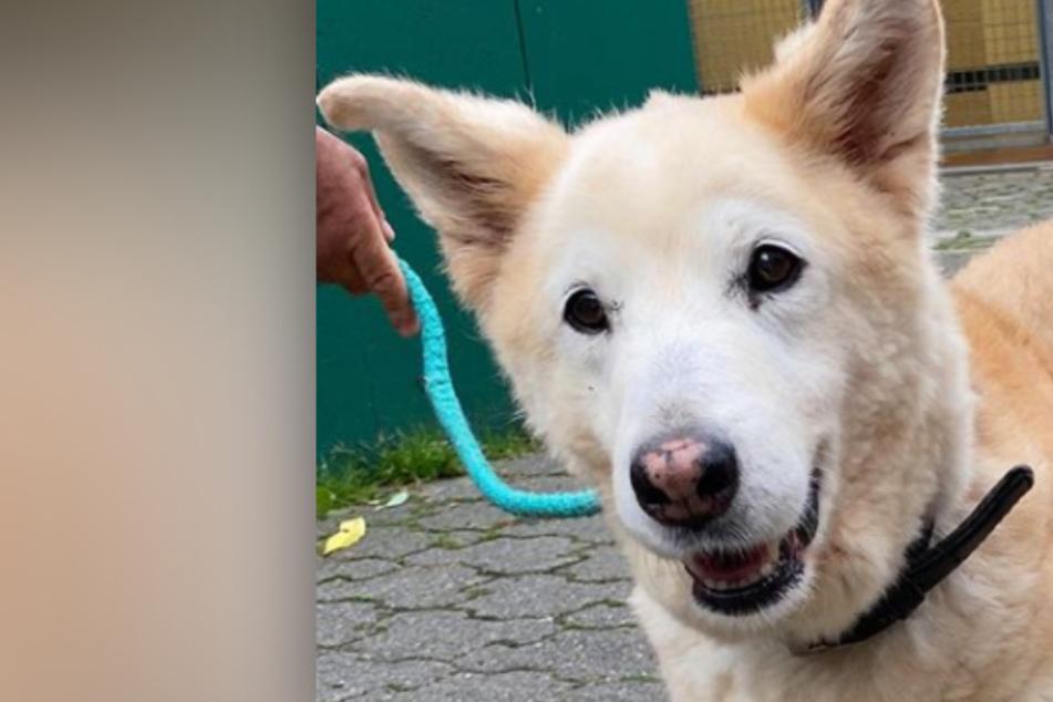 Kurios: Dieser süße Hund hat extrem kurze Beine