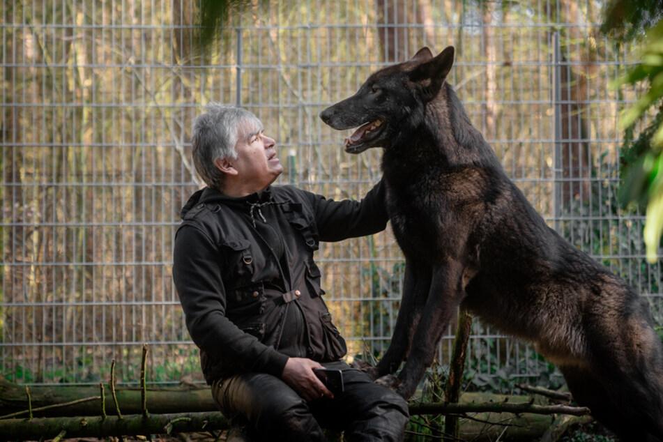 """Christian Berge (57) mit seinem Wolfshund """"Ghandi"""". Die Doku """"37°: Der mit dem Wolf lebt - Die Wildnis im Wohnzimmer"""" im ZDF."""