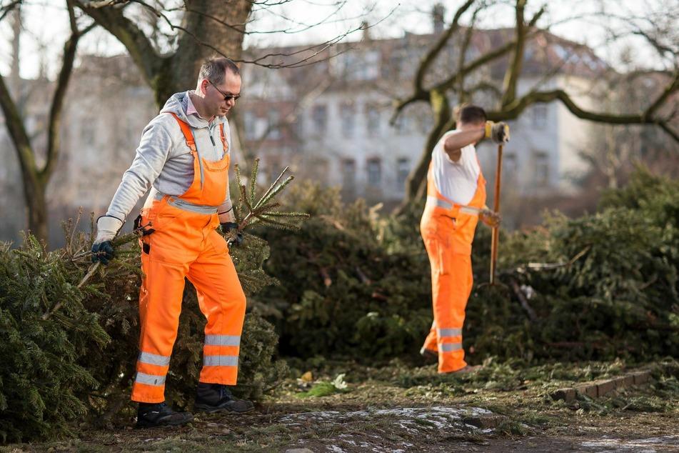 Die Stadtreinigung Leipzig holt die Weihnachtsbäume auch in diesen Jahr wieder von den Ablageplätzen ab.