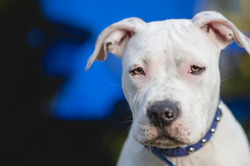 Hund zwei Jahre lang von seinem Besitzer vergewaltigt