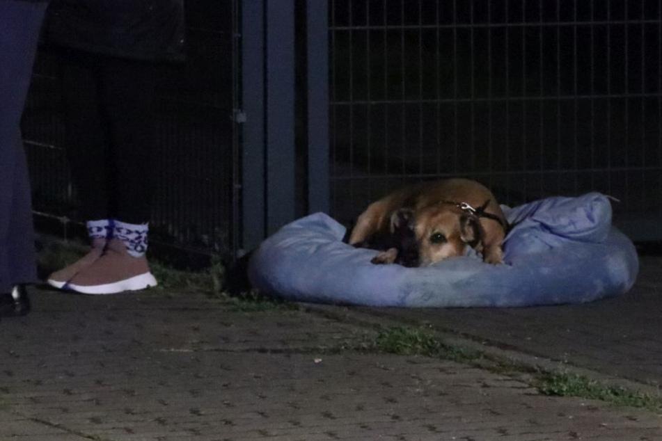 Einer der geretteten Hunde beobachtet das Geschehen aus sicherer Entfernung.