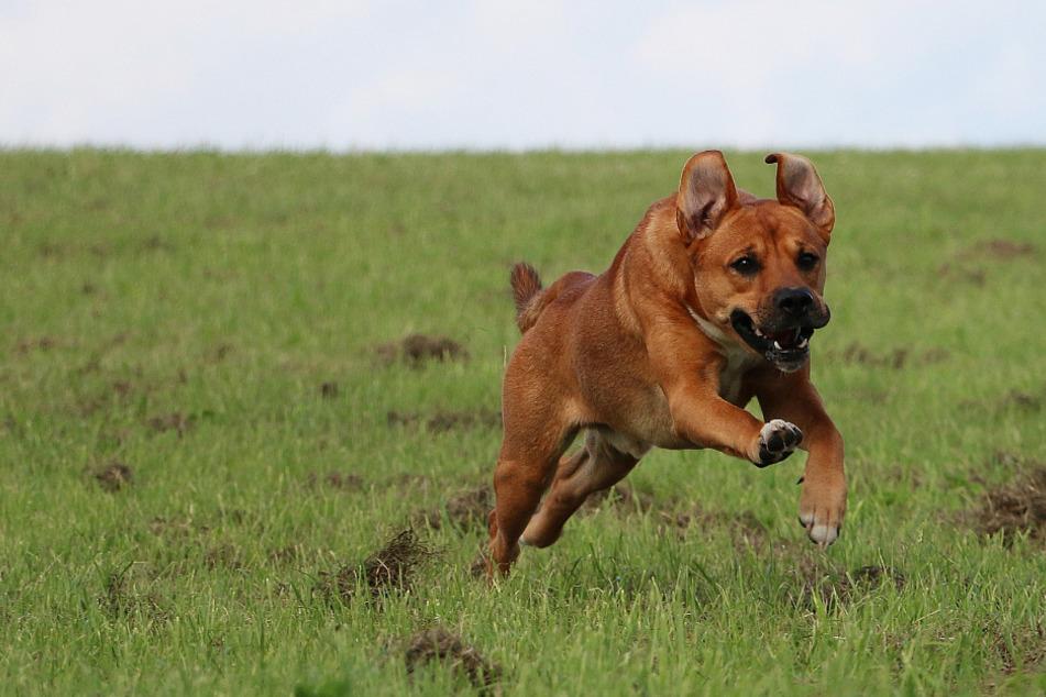 Ausgerissener Hund verfolgt Jungen (11), dann kommt ein Auto