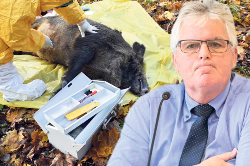 Schweinepest: Landrat Lange fordert die Polizei zum Einsatz