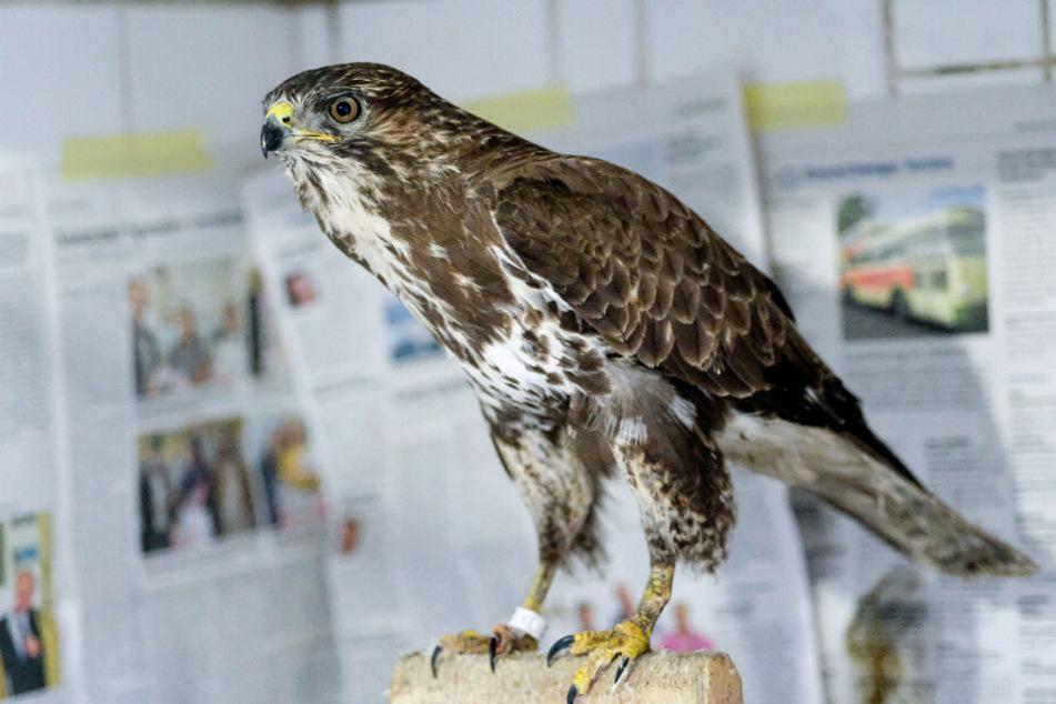 Vogelgrippe jetzt auch im Norden nachgewiesen!