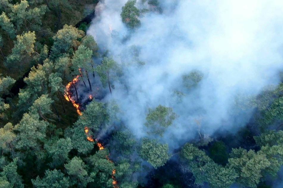 Rauch steigt über dem Waldstück auf an der A14 auf.