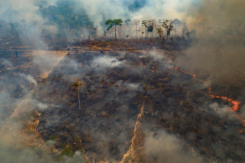 Brazil celebrates Amazon Day as rainforests continue to burn