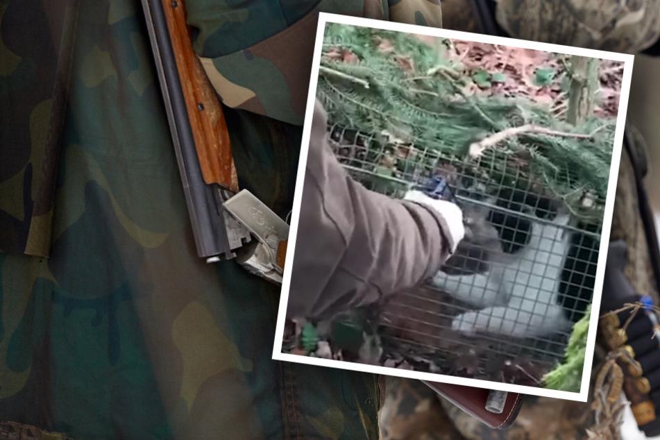 Horror-Szenen: Verängstigte Katze in Falle angeschossen, qualvoller Todeskampf