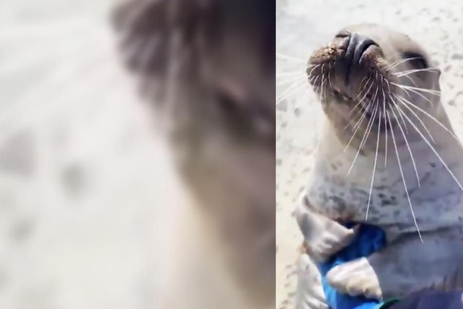 Robbe freut sich extrem über banale Geste eines Tierschützers