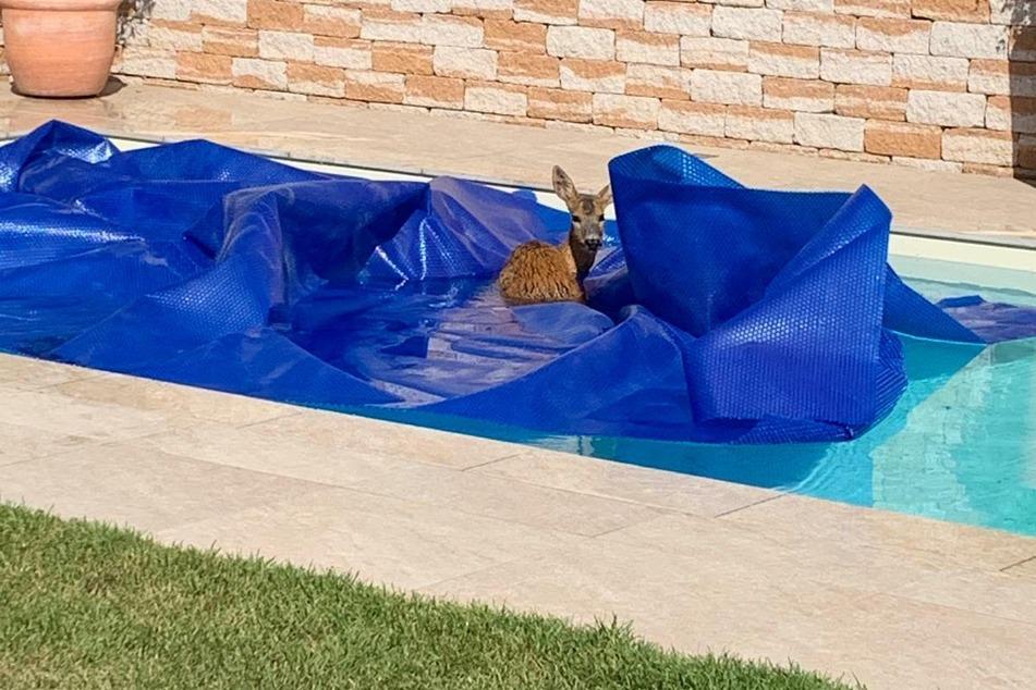 Wer schwimmt denn hier im Pool und braucht Hilfe?