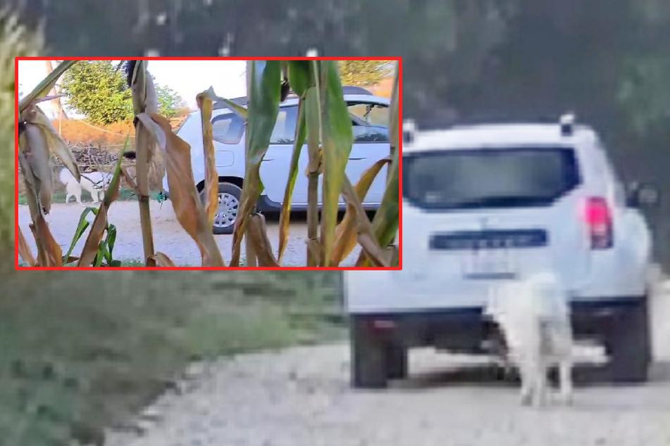 Frau fährt mit dem Auto: Furchtbar, was sie ihrem Hund antut