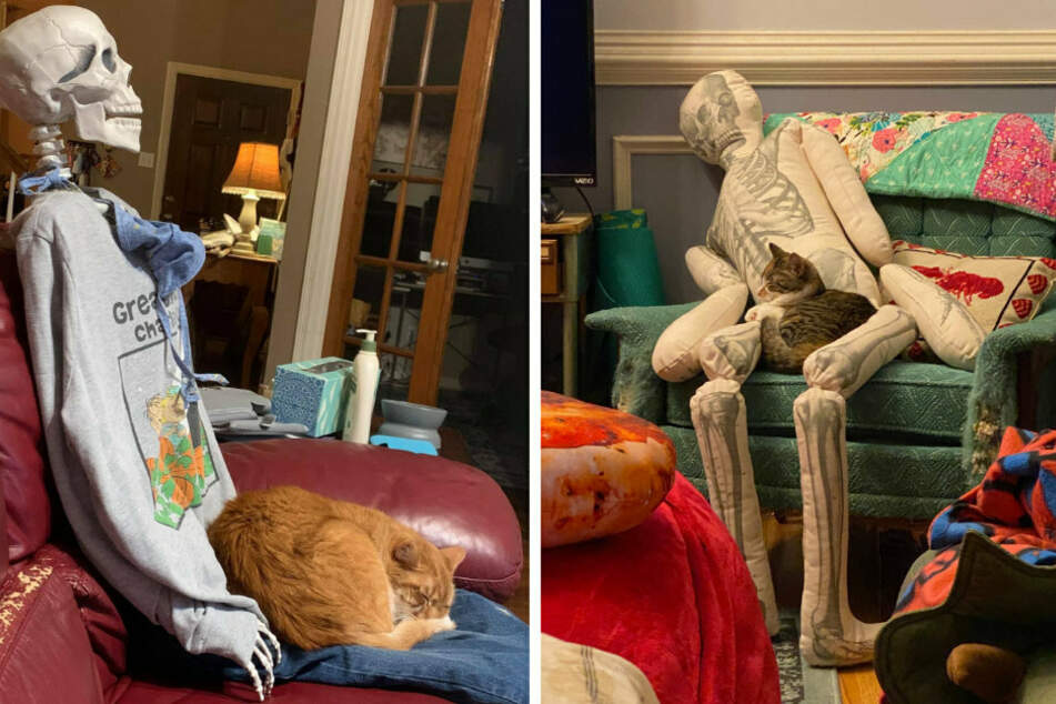 Cats seem to find a skeleton's bony lap quite comfortable (collage).