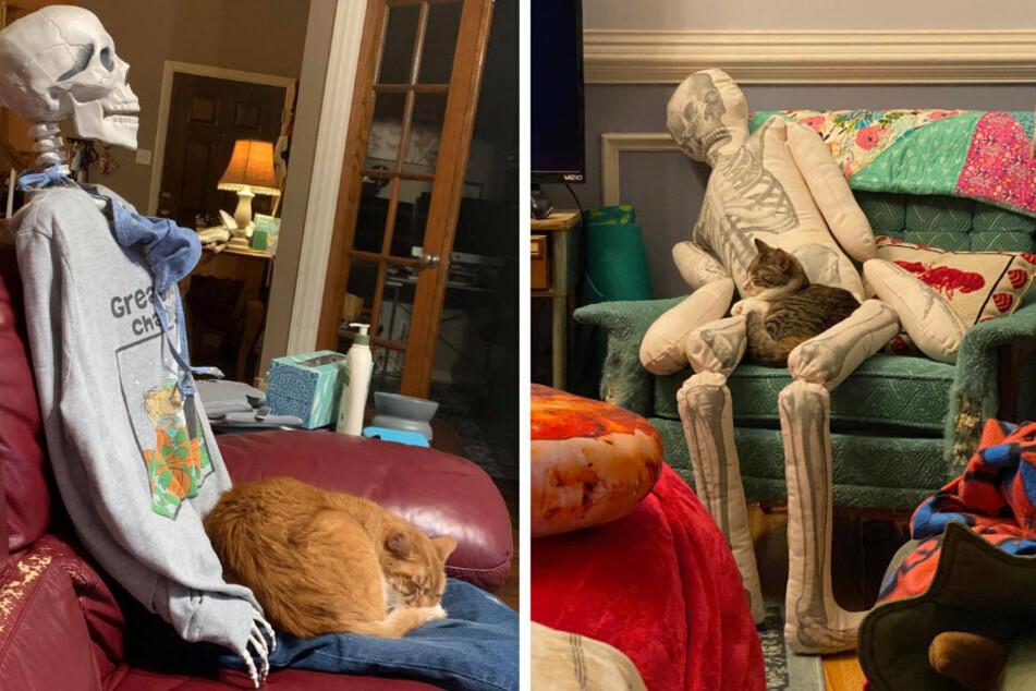 Angefangen hat alles mit einem Plüsch-Skelett und der Katze Hazel (rechts). Schon bald präsentierten zahlreiche Menschen, wie sehr ihr Vierbeiner die knochigen Skulpturen liebt.