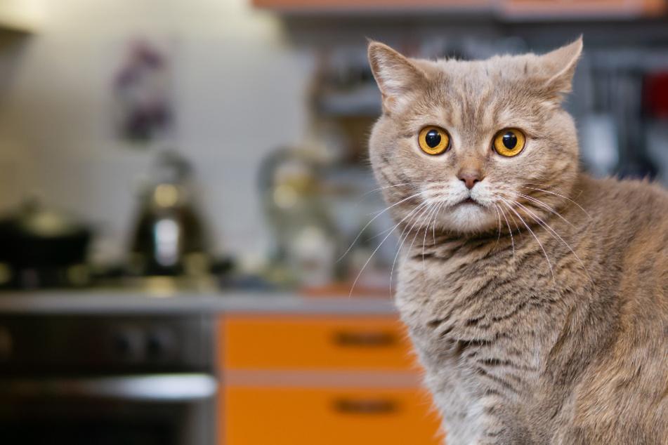 Video klärt auf: Das macht Eure Katze, wenn Ihr nicht da seid
