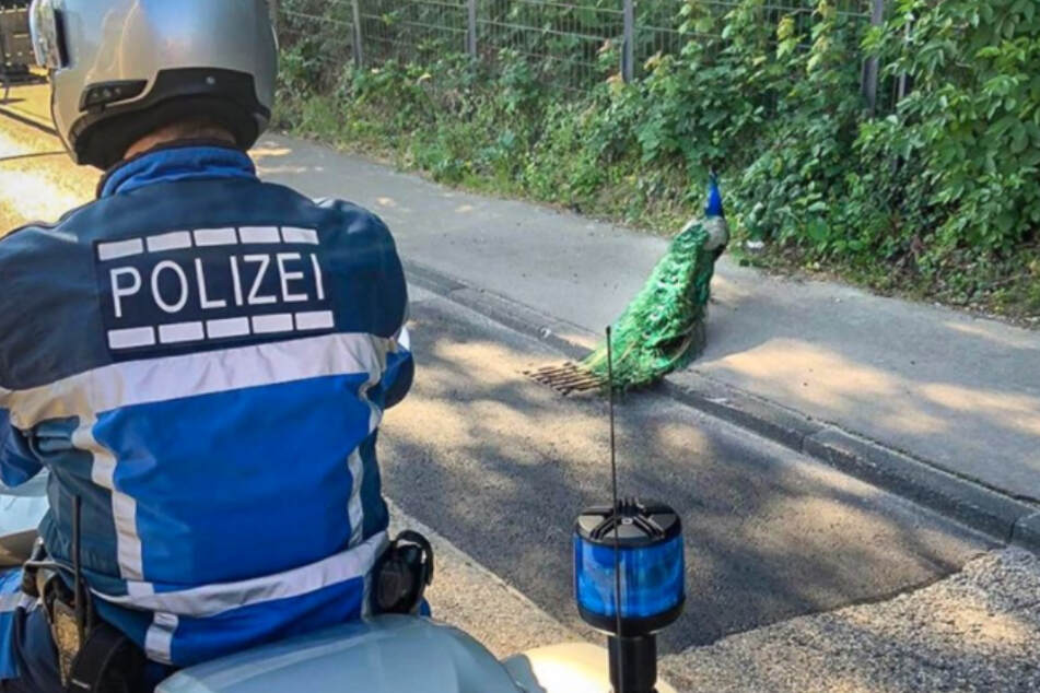 """""""Pfau wie Vendetta"""": Polizei sorgt mit Social-Media-Post für Lacher"""