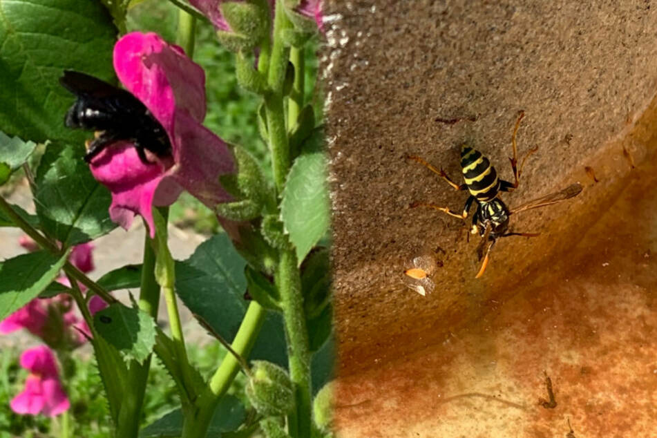 So könnt Ihr Insekten bei Hitze und Trockenheit helfen