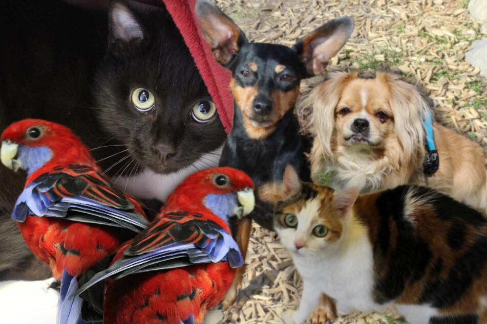 6 besondere Hunde und Katzen: Diese Haustiere suchen dringend ein Zuhause