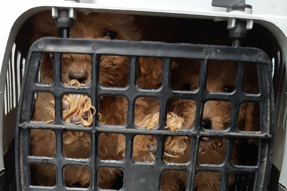 Die Tiere waren in einem schlechten gesundheitlichen Zustand und wurden sichergestellt.