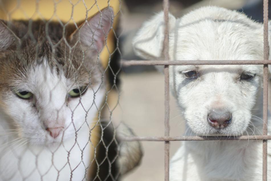 Trotz Corona: Umsatz mit Hunde- und Katzenfleisch in Asien steigt an
