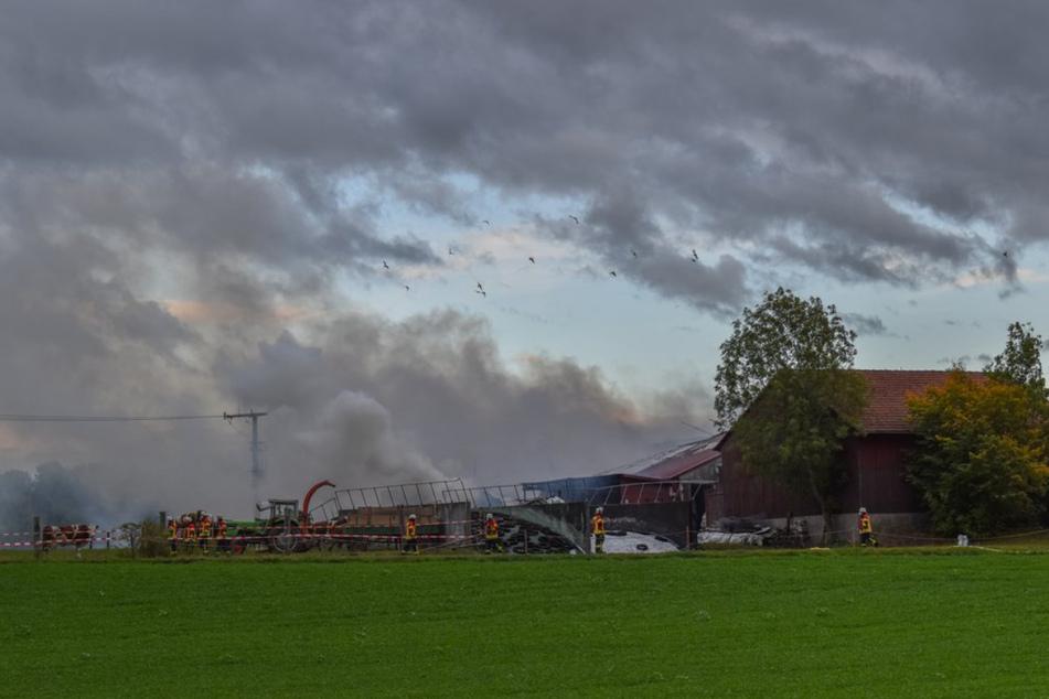 Feuer-Drama im Stall: Kuh und drei Kälber verbrennen
