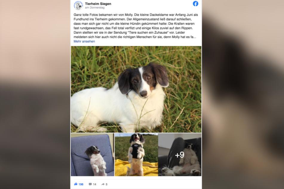 In einem Facebook-Post verkündete das Tierheim die schöne News.