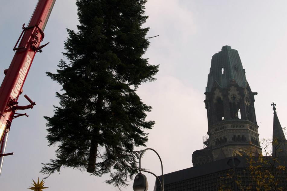 Falschparker verhindern Weihnachtsbaum-Transport zum Breitscheidplatz